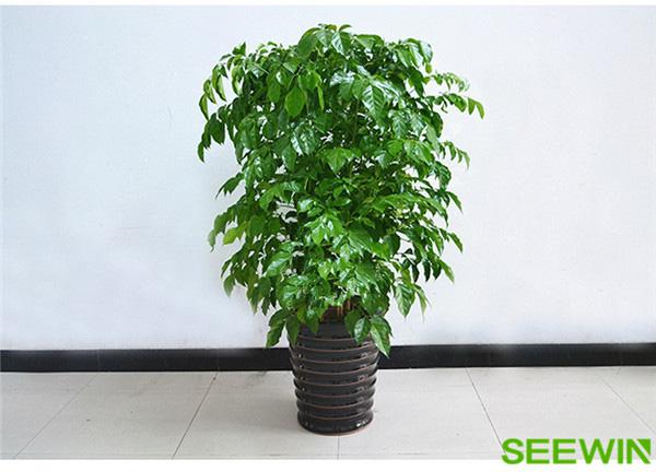 净化空气的植物 万博体育官方下载万博体育下载ios展厅