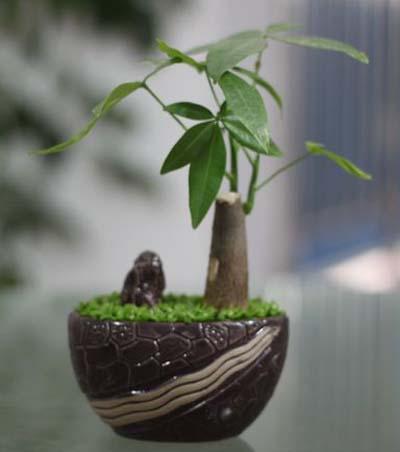 如何挑选一盆草让你办公室逼格更高!