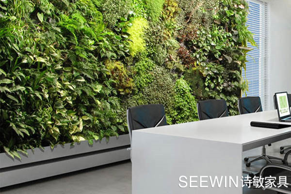 办公室绿植品相,位置摆放也有讲究!