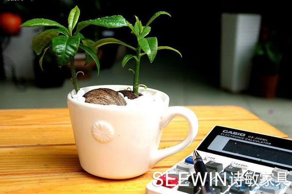 常见桌面小绿植对你的办公室风水有什么影响?