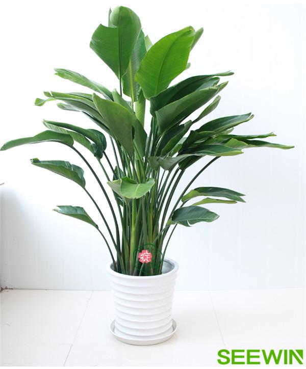 会议室适合摆放什么绿植可以有效吸收甲醛?